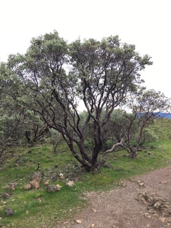 Medford, Oregón: Various photos from hike to top