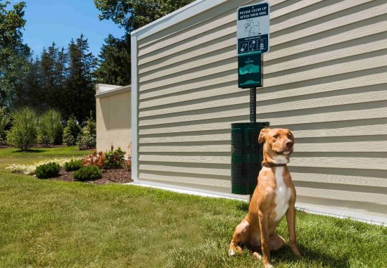 Latham, Estado de Nueva York: Pet Station