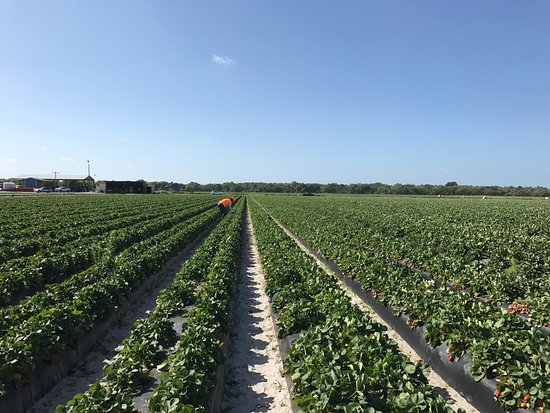 Wimauma, FL: Berry Bay Farm