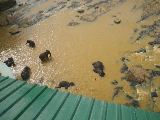 Hotel Elephant Park: Blick vom Zimmerbalkon