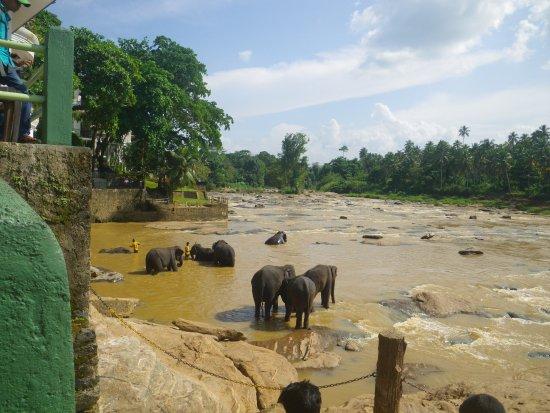 Hotel Elephant Park: Blick von der Hotelterasse