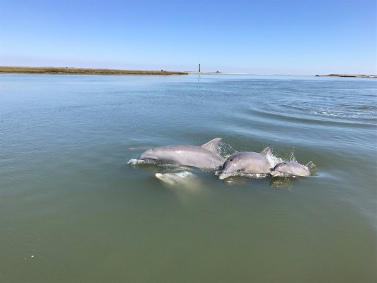 Charleston Outdoor Adventures: Pod of dolphins near Morris Island Lighthouse