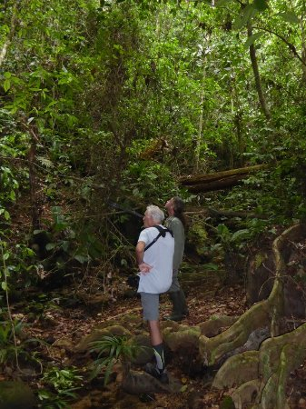Portobelo, ปานามา: découverte de la jungle avec Pascal
