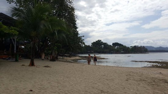 Puerto Viejo Beach: A beach with trees.