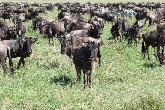 Arusha Region, Tanzania: Migration