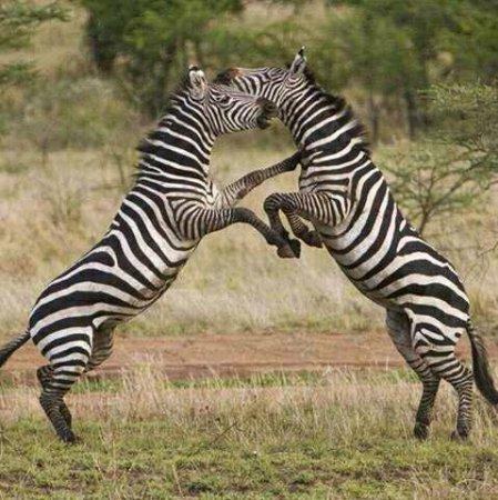 Arusha Region, Tanzania: Difference of opinion?