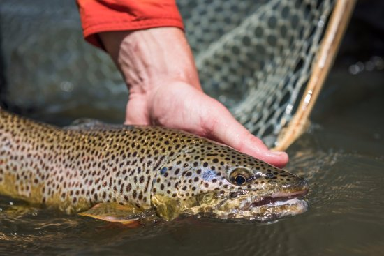 Cameron, MT: fishing