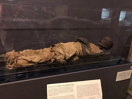 Rosicrucian Egyptian Museum: photo5.jpg