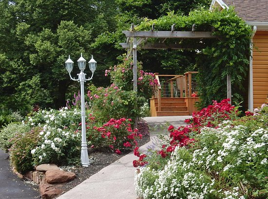 Montague, Canada: Our Backyard Pergola with Roses and Wisteria