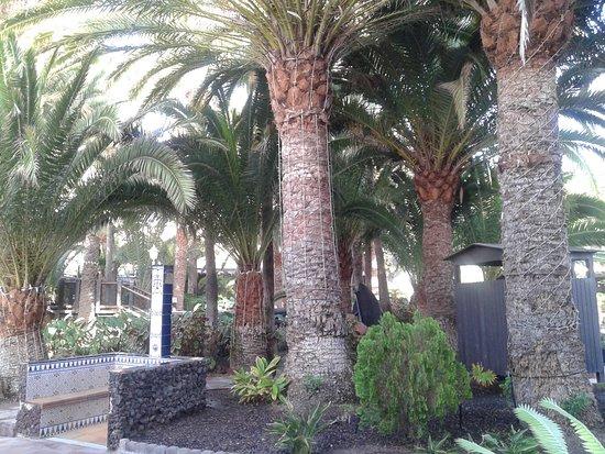 Hotel Parque Tropical Gran Canaria Tripadvisor