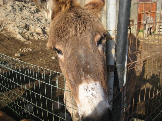 Marzagan, Spanje: Pedro the donkey
