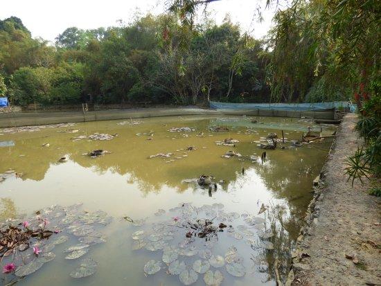 Luong Son, Vietnam: le jardin
