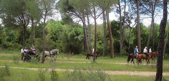 Mairena del Aljarafe, สเปน: Riding horse  in  Parque Natural Coto de Doñana