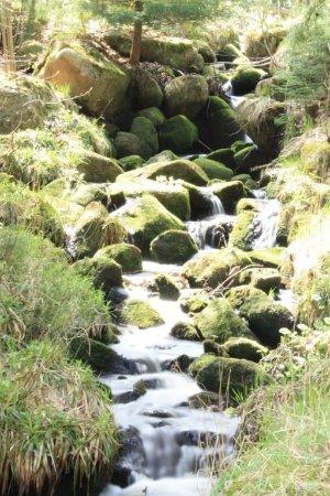 Schierke, Германия: unser Wildbach direkt auf dem Grundstück