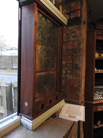 Knutsford, UK: Observation hive in the shop