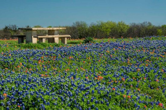 This was not taken in Bluebonnet Park - but at another location in Ennis.