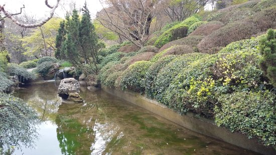 Giardino giapponese foto di orto botanico di roma roma