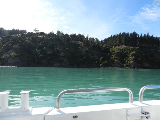 Akaroa, New Zealand: views from the boat