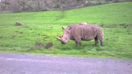 Winston, OR: rhino - dont stop they will charge