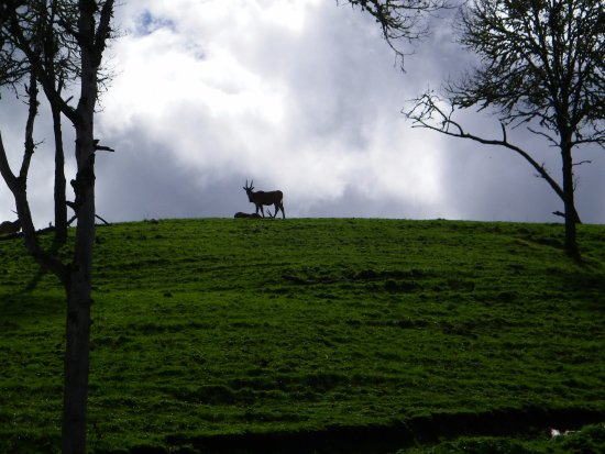 Winston, OR: hillside is covered with animals