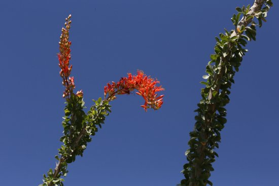 Borrego Springs, CA: red, green and blue