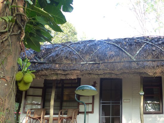 Spice Village: Our lovely bungalow, with a jackfruit tree right outside the door