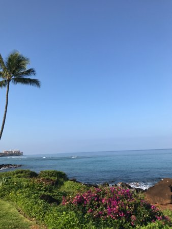 Polynesian Shores: Morning coffee view 50 steps from the unit