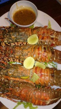 Kalpitiya, Sri Lanka : Fresh lobster