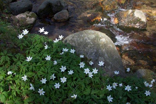 Madremanya, Spain: floración primaveral