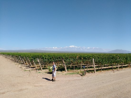 Agrelo, Argentyna: Viñas and Andes in the back