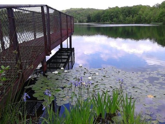 Drums, PA: Pretty water lilies grace this rustic metal dock!