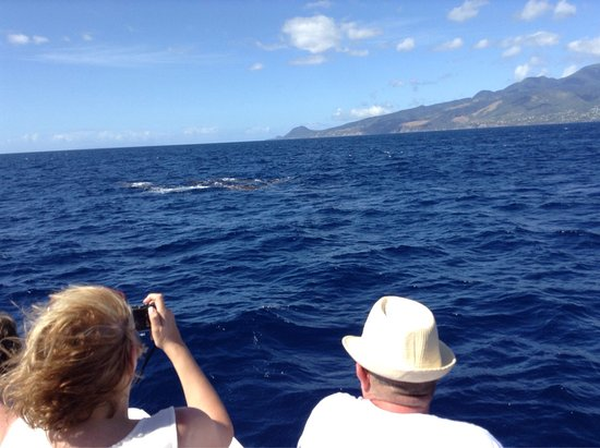 Dive Dominica : Photos of the whales we saw.  Simply amazing.