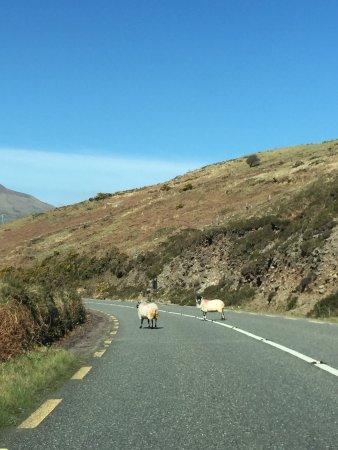 Inch, Irland: photo4.jpg