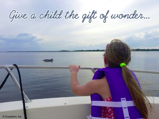 Fernandina Beach, Флорида: A dolphin on the Amelia River! Oceanbird Boat Tours are perfect for children.