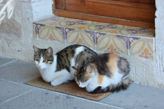 Ortahisar, Turchia: Playful cats were seen at times