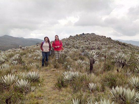 Cundinamarca Department, Kolumbien: Bajando del mirador, en medio de frailejones de varios tamaños