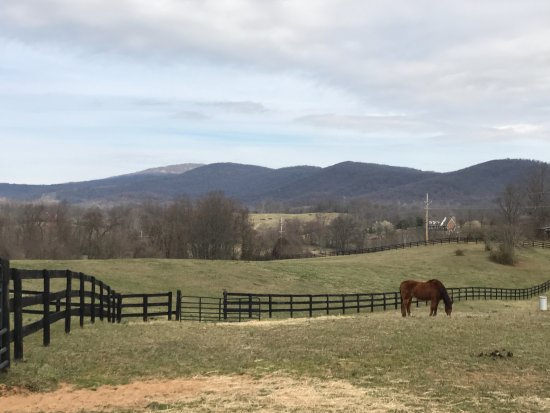 Huntly, VA: view of the horse pasture