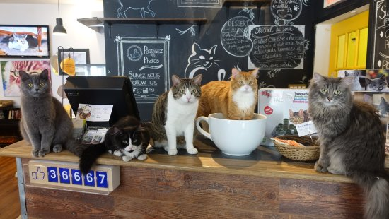 Cafe Chat l'Heureux照片