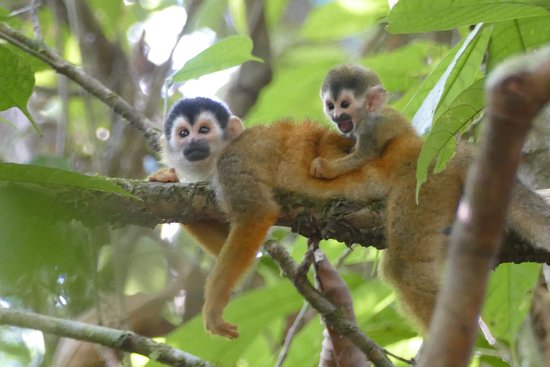 Drake Bay, Costa Rica: squirrel monkeys, corcovado