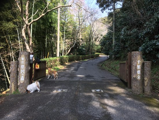 Tonosho Forest Park
