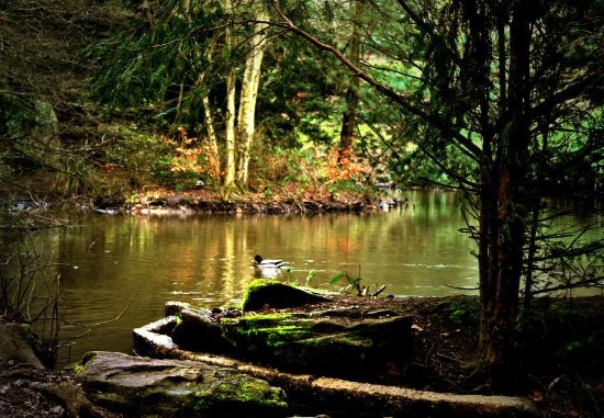 Bury, UK: Pond  at  Heaton  park