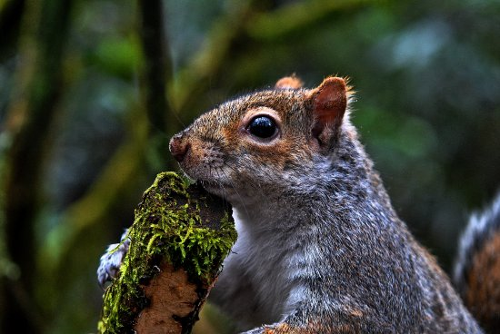 Bury, UK: Wildlife  at  Heaton  park