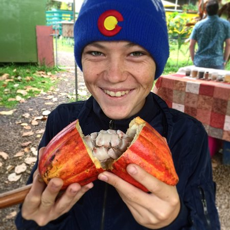 Kilauea, HI: Cacao pods and tropical fruits on the tour