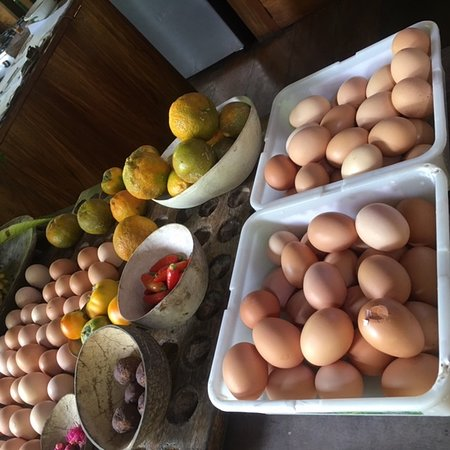 La Loma Jungle Lodge and Chocolate Farm: Foods are fresh and beautifully prepared