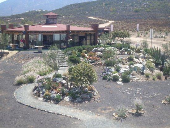 Valle de Guadalupe, Meksiko: Sala de degustacion desde la bodega