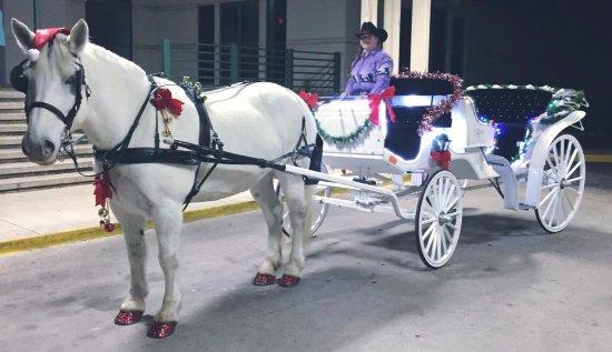 Lago Vista, Τέξας: Santa Diva for a corporate party.