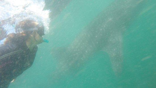 Coral Bay, Australia: photo0.jpg