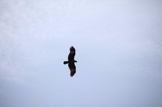 Kilim Karst Geoforest Park: Flying eagle at the Park