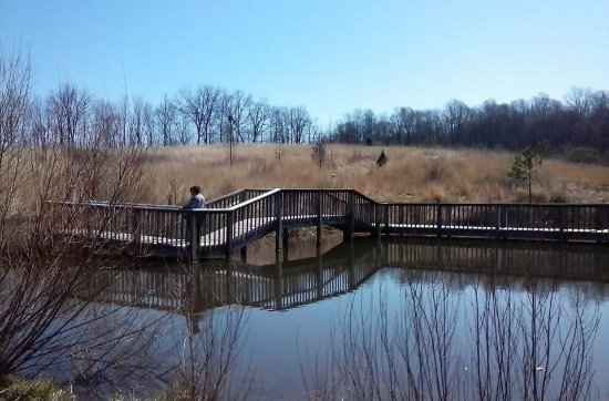 Mansfield, OH: Controlled prairie burn