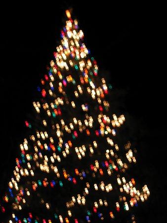 Hara-mura, Japan: SEQUOIAのクリスマスイルミネーション